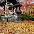 Photos: 百人一首-京都市右京区:常寂光寺