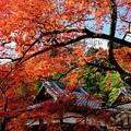 外国人がいない京都-京都市右京区:常寂光寺