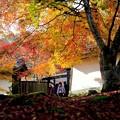 Photos: 嵯峨野-京都市右京区:二尊院