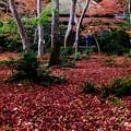 Photos: 静かな尼寺-京都市右京区:祇王寺
