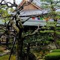 Photos: 門跡寺院-京都市右京区:大覚寺