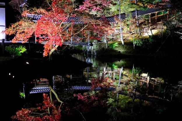 紅葉のライトアップ-京都市東山区:高台寺