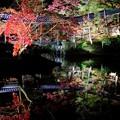Photos: 紅葉のライトアップ-京都市東山区:高台寺