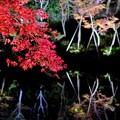 盛者必衰-京都市東山区:高台寺