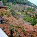 紅葉を求めて-京都市東山区:清水寺