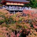 ちょっと残念-京都市東山区:清水寺
