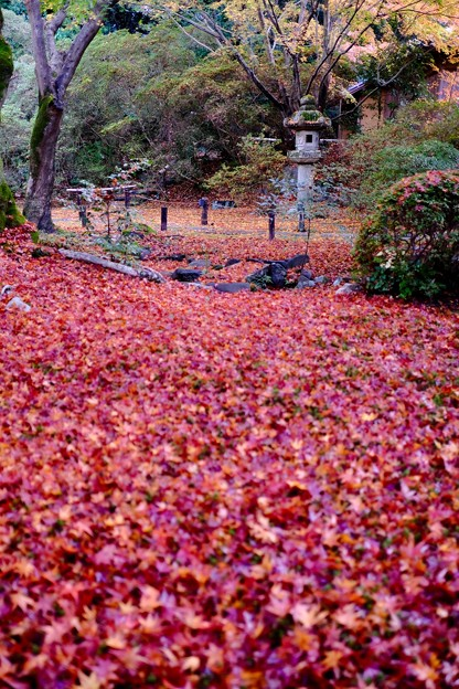 冬来りなば-京都市東山区:青蓮院門跡