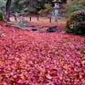 Photos: 冬来りなば-京都市東山区:青蓮院門跡