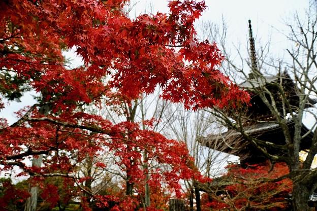 紅葉に彩られる名刹-京都市左京区:真如堂