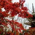 Photos: 紅葉に彩られる名刹-京都市左京区:真如堂
