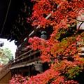 赤く、紅く、そして朱く-京都市左京区:真如堂