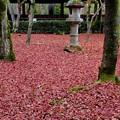 Photos: よく歩いたなぁ-京都市左京区:真如堂