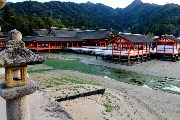 海に浮かぶ神社-広島県廿日市市:厳島神社