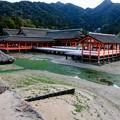Photos: 海に浮かぶ神社-広島県廿日市市:厳島神社