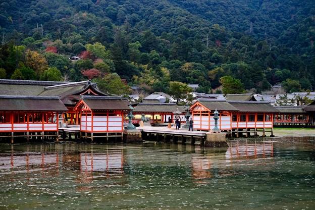 早朝の参拝-広島県廿日市市:厳島神社