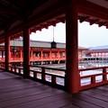 美しい社殿-広島県廿日市市:厳島神社