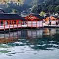 潮が満ちて-広島県廿日市市:厳島神社