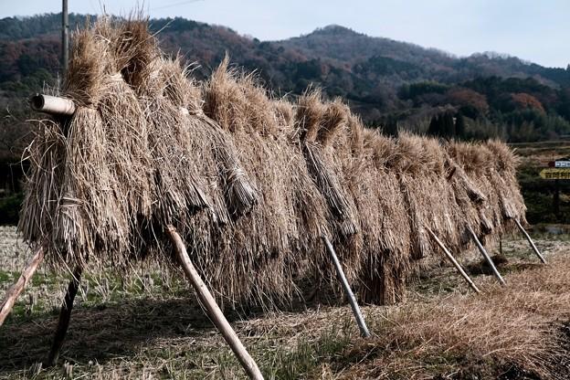 稲藁干し-奈良県桜井市:山辺の道
