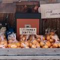 Photos: 日本人の美徳-奈良県桜井市:山辺の道