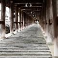Photos: 登廊の美しさ-奈良県桜井市:長谷寺