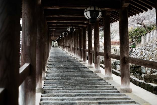 早起きしたご褒美-奈良県桜井市:長谷寺