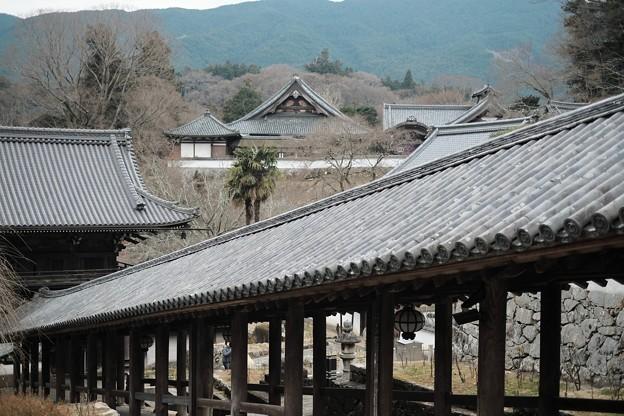 冬には冬の良さがある-奈良県桜井市:長谷寺