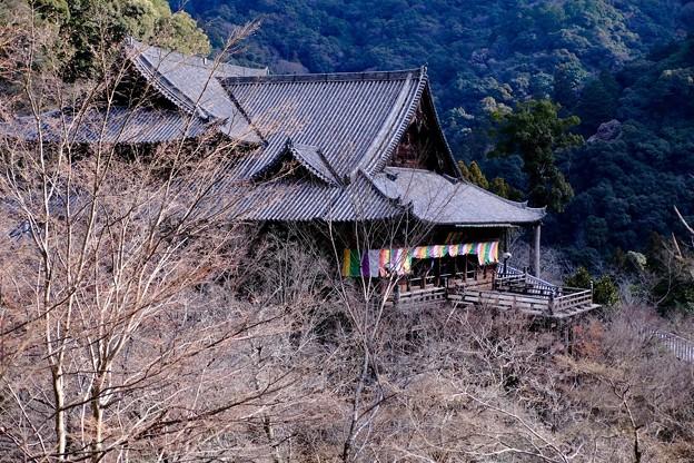 桜の季節を夢見て-奈良県桜井市:長谷寺