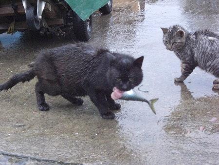 猫@田代島