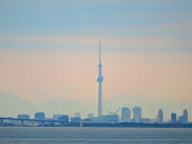 Photos: 東京湾の風景 スカイツリー