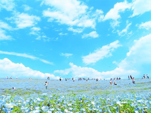 Photos: 水色の丘