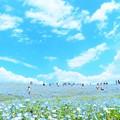 写真: 水色の丘