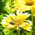 花とコガネムシ 3