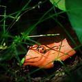天道虫 オレンジ色の葉の上で