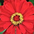 極彩色 赤い花