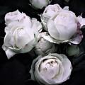 写真: 極彩色 白い花