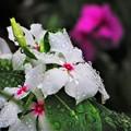 雨の日 2