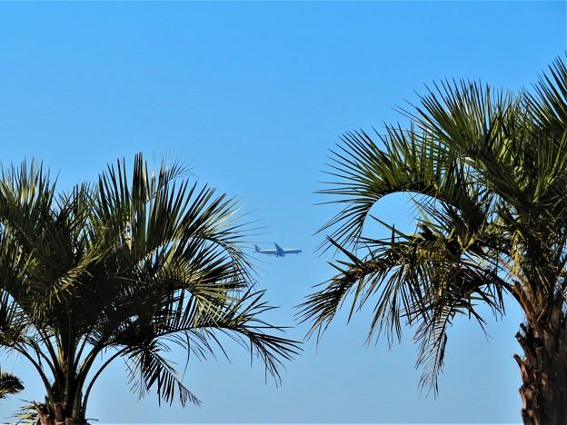 写真: 今日観た風景 飛行機