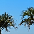 今日観た風景 飛行機