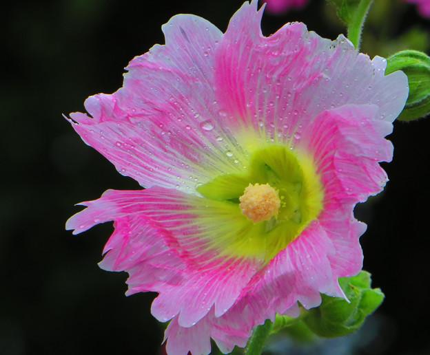 沖縄で見た花2