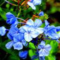 写真: 沖縄の花はしっとりと輝いている