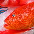 写真: 沖縄の赤い魚