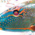 写真: 沖縄のお魚