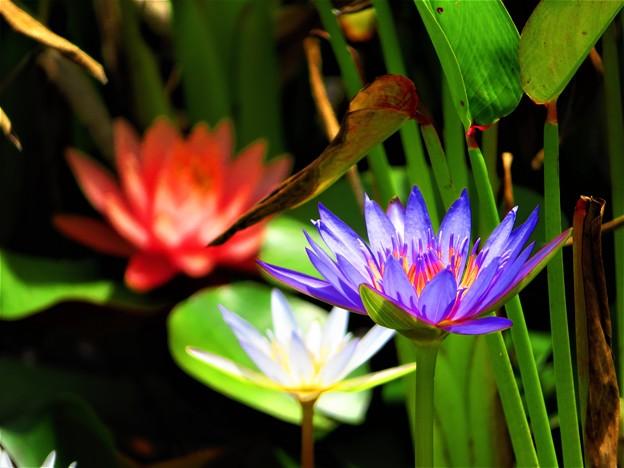 沖縄で見た花1