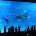 写真: 美ら海水族館