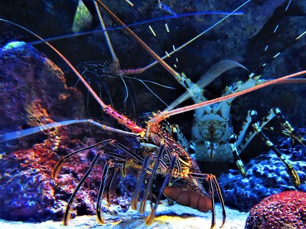 美ら海水族館 2