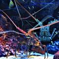 写真: 美ら海水族館 2