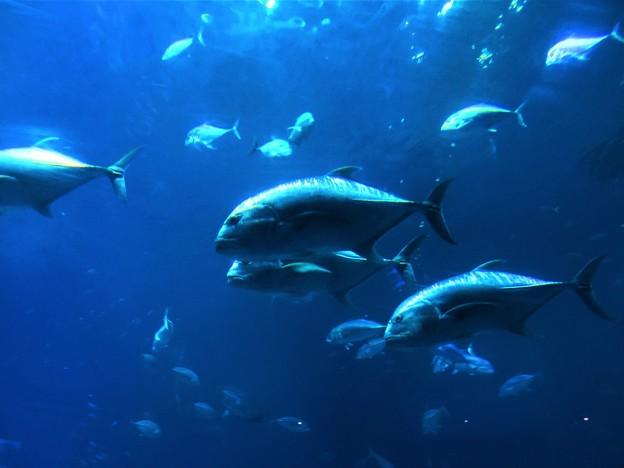 美ら海水族館 3