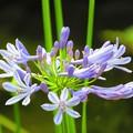 写真: 沖縄で見た花3