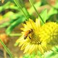 沖縄で見た風景 蜜蜂