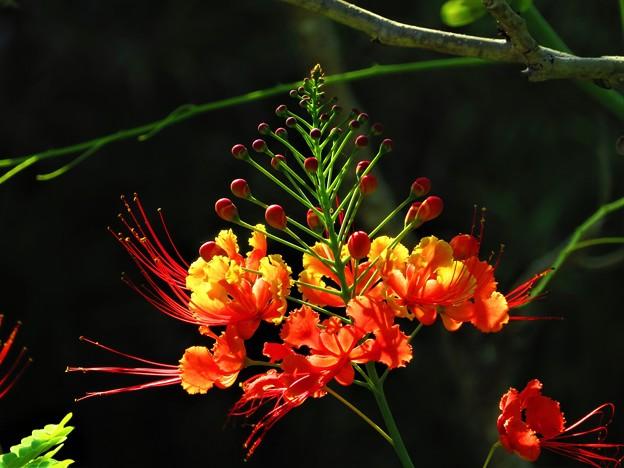 南海の島の赤い花2